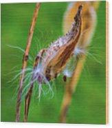 Autumn Milkweed 7 Wood Print