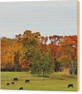 Autumn Minnesota Black Angus Cattle Wood Print