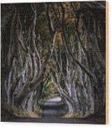 Autumn Morning At Dark Hedges Alley  Wood Print
