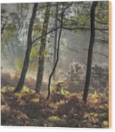 Autumn Morning Wood Print