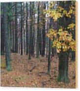 Autumn Morning Wood Print