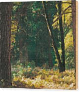 Autumn Morning Yosemite National Park Wood Print
