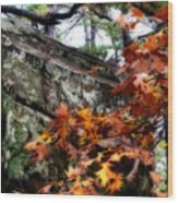 Autumn Moss Wood Print