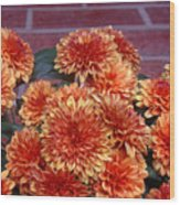 Autumn Mums - Against Brick Wood Print