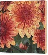 Autumn Mums - Touching Wood Print