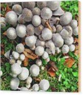 Autumn Mushrooms Wood Print