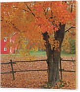 Autumn Near New Germany, Nova Scotia Wood Print