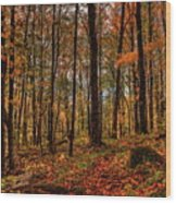 Autumn On The Ice Age Trail Wood Print