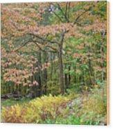 Autumn Paints A Dogwood And Ferns Wood Print