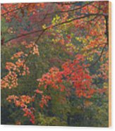 Autumn Palette Wood Print