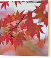 Autumn Pastel Wood Print