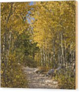 Autumn Path Wood Print by Andrew Soundarajan