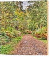 Autumn Path Wood Print