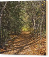 Autumn Path In Spearfish Canyon Wood Print