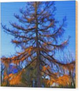 Autumn Pine Tree Wood Print