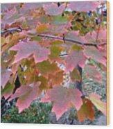 Autumn Pink 2 Wood Print
