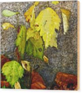Autumn Rainbow Wood Print
