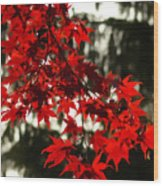Autumn Red Wood Print by Jeff Breiman