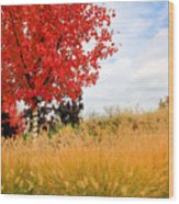 Autumn Red Maple Wood Print