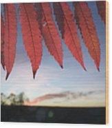 Autumn Red Sumac Leaves Wood Print
