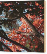 Autumn Red Trees 2015 02 Wood Print