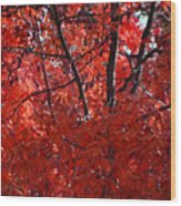Autumn Red Trees 2015 Wood Print