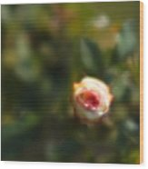 Autumn Rosebud Wood Print