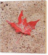 Autumn Sand Wood Print
