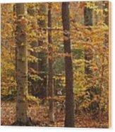 Autumn Scenery Wood Print