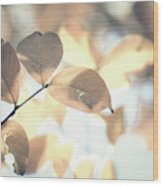 Autumn Season Leaves On A Tree In Sun Light Wood Print