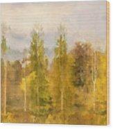 Autumn Shear Poplars Wood Print
