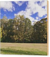 Autumn Skies Wood Print