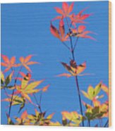 Autumn Skies Wood Print