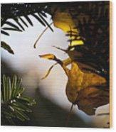 Autumn Song Wood Print