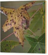 Autumn Spotted Wood Print