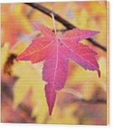 Autumn Still Wood Print