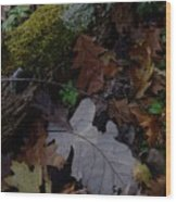 Autumn Still-life Wood Print