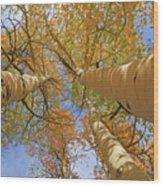 Autumn Straight Up Wood Print