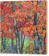Autumn Sugar Maple Wood Print