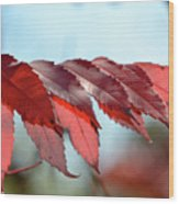 Autumn Sumac Wood Print