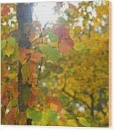 Autumn Sun Wood Print