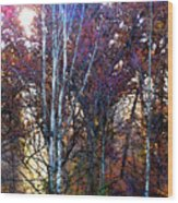 Autumn Sunlight Wood Print