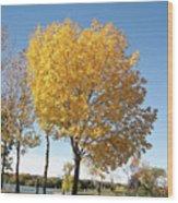 Autumn Sunshine Wood Print