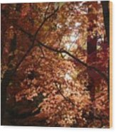 Autumn Sunshine Poster Wood Print