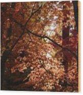 Autumn Sunshine Poster Wood Print by Carol Groenen
