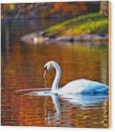 Autumn Swan Lake Wood Print