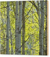 Autumn Through The Trees Wood Print