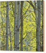 Autumn Through The Trees Wood Print