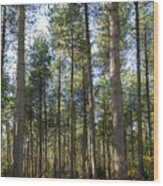 Autumn Tranquil Forest Wood Print