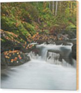 Autumn Treasure Wood Print